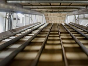 Matzot on a cooling conveyor Manischewitz factory in Newark, New Jersey.
