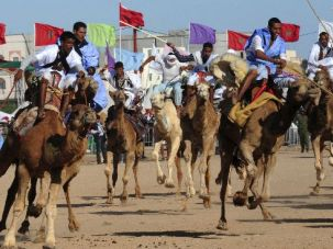 A camel race in the Moroccan desert.