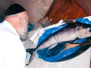 Gastronomic: A diner examines a swordfish as part of the six-hour meal.