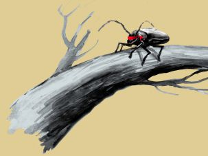 'When a blind beetle crawls over the surface of a curved branch, it doesn't notice that the track it has covered is indeed curved. I was lucky enough to notice what the beetle didn't notice.'  —Albert Einstein