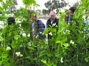 Pea Trellis: Surrounded by fellow convenors, Fred Margulies of Pushing the Envelope Farm is framed by the Coastal Roots Farm's pea flowers.