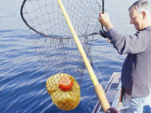 Sustainable Fishing: Wild-caught gefiltefish off the coast of Maine