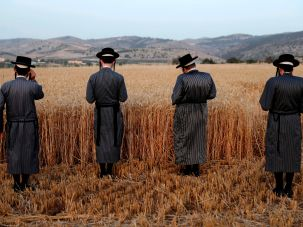 Ultra-Orthodox Jews praying after harvesting wheat at a settlement near Modi'in-Maccabim-Re'ut.