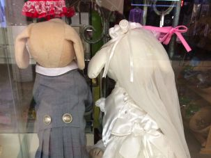 Canine wedding attire in Toronto.