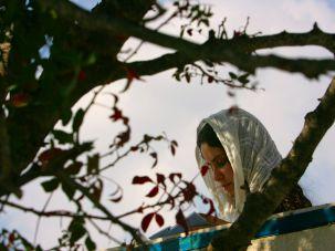 Jewish woman praying at tomb of Rabbi Yitzhak Luria.