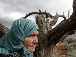A Kind of Terror: A Palestinian woman holds onto a destroyed olive tree in the northern West Bank village of Qarut on October 19, 2013.