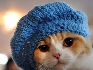 Feline headgear