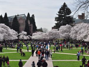 Cherry blossoms bloom on the Quad of the University of Washington in Seattle.