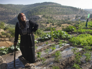 Deep Roots: A Palestinian farmer irrigates her land in the West Bank village of Battir.
