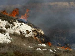 Palestinian olive groves burn after Jewish settlers carry out arson attack near village of Farata in 2012.