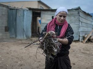 Ancient Peoples: Bedouin woman gathers firewood at a settlement in the Negev desert. Why doesn?t Israel work with the ancient people, instead of fomenting conflict, Theo Bikel asks.