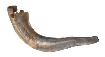 A shofar from Rabbi Abihu Reuben, a student of Rabbi Wentworth Matthew, will appear at the new Smithsonian Museum of African American History and Culture.