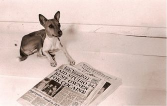?dog?: The headline is self- explanatory, the newspaper insert reads: ?The Post intro- duces a new section covering every aspect of the recorded music scene.? [click for larger view]