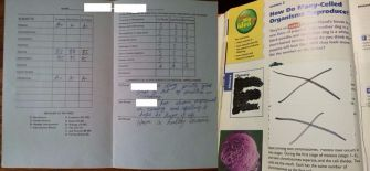 Report cards and textbooks from Hasidic yeshivas collected by Yaffed.