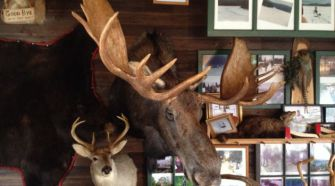 Beasts: A tremendous moose head dwarfs a deer head at Two Rivers Lunch in Allagash, Maine.
