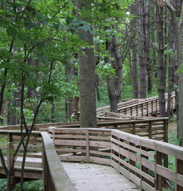 The Fort River Birding and Nature Trail