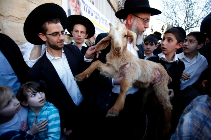 A member of the Temple Institute holds a goat in an enactment of the preparation for the renewal of the Passover sacrifice in the third Jewish Temple in 2012.