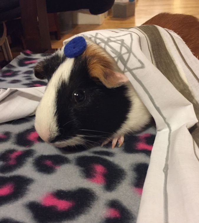 Today I Am A Pig: Snickers gives his bar mitzvah speech.