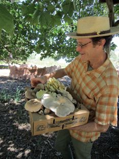 Steve Schwartz with some of his shiitake mushrooms