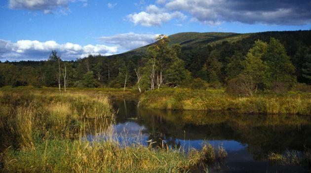 Summer Idyll: Ticks abound in the picturesque Catskills.
