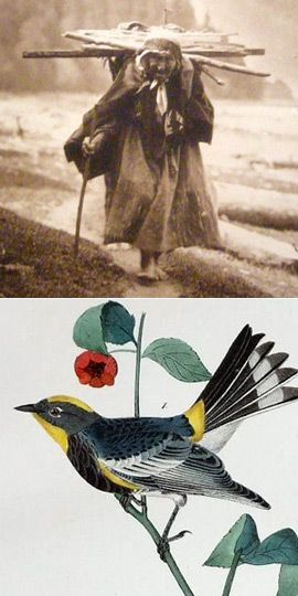 Faggots and a Feygele: Above, a 1910 photograph, titled ?A Gatherer of Faggots at Neah Bay,? of a Makah Indian. Below, Audubon?s rendering of a myrtle warbler.