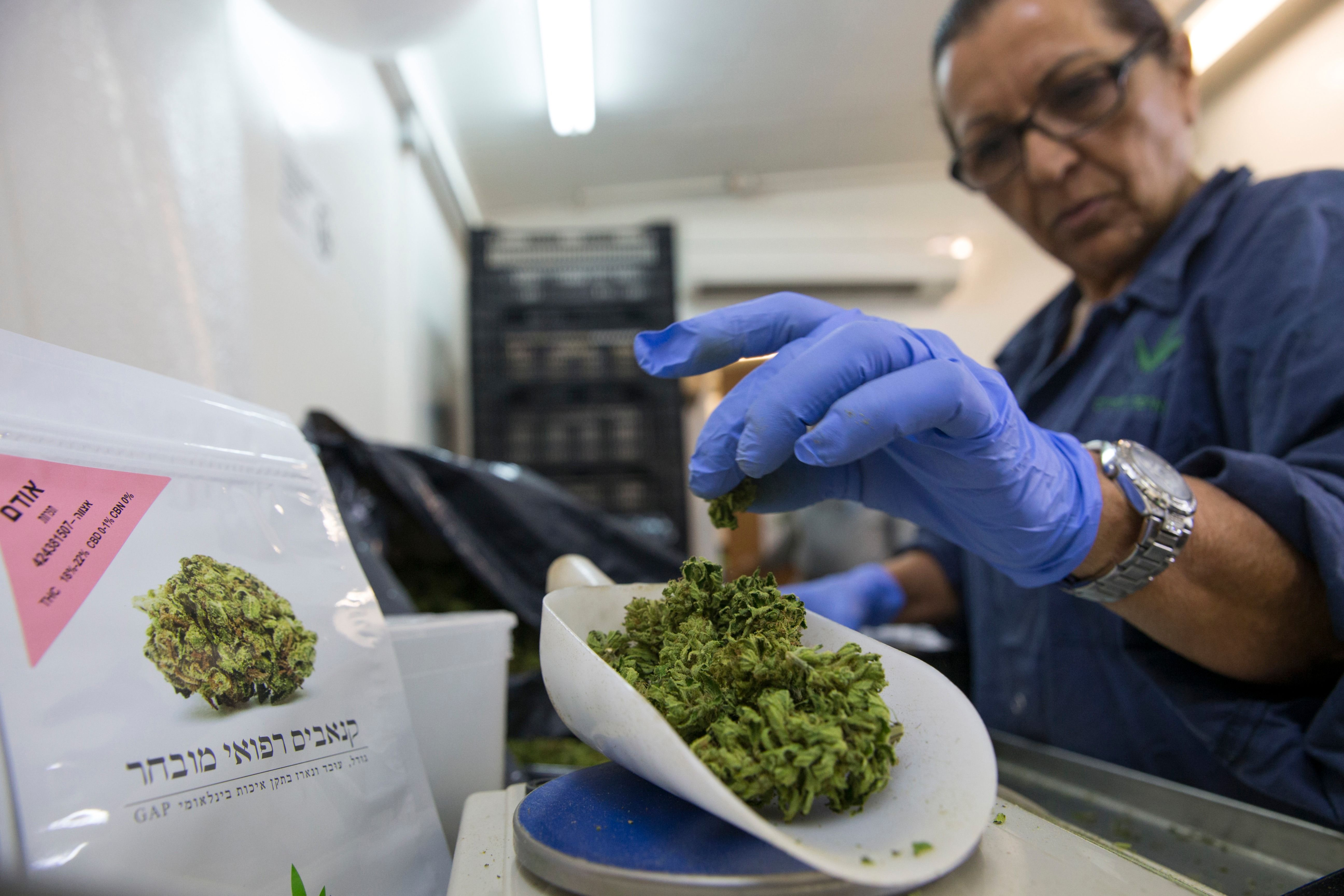 A woman weighs marijuana buds at the second-largest medical cannabis farm in Israel, in Kfar Pines.