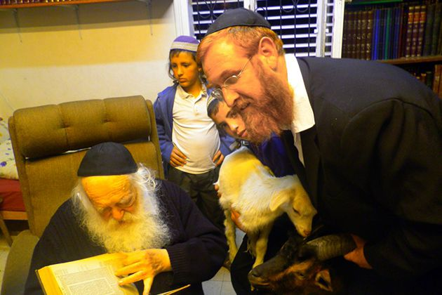 Preparing for Sacrifice: Yehudah Glick holds a goat while Chaim Kanievsky, a rabbinic authority, checks his sources.