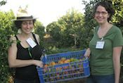 Gleaning clementines with Leket