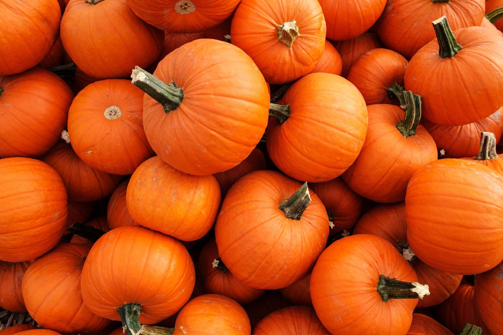 jack olantern pumpkins can be kosher says ashley blaker u2013 the forward