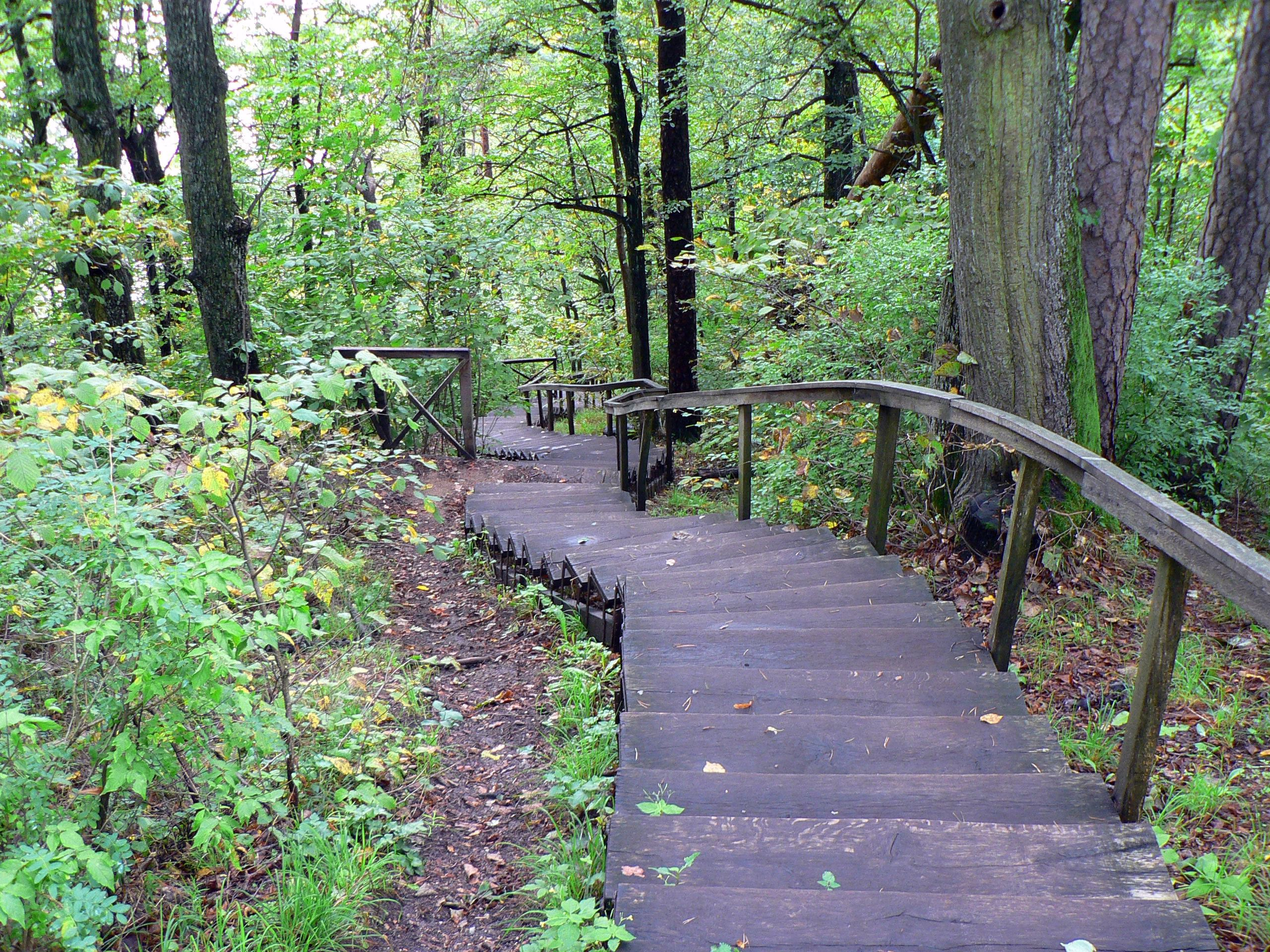 The Vilnius forest