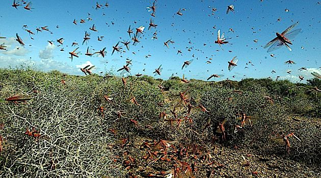 Locusts swarmed Spain in 2004, much like they are plaguing the Middle East now on the eve of the Passover season.