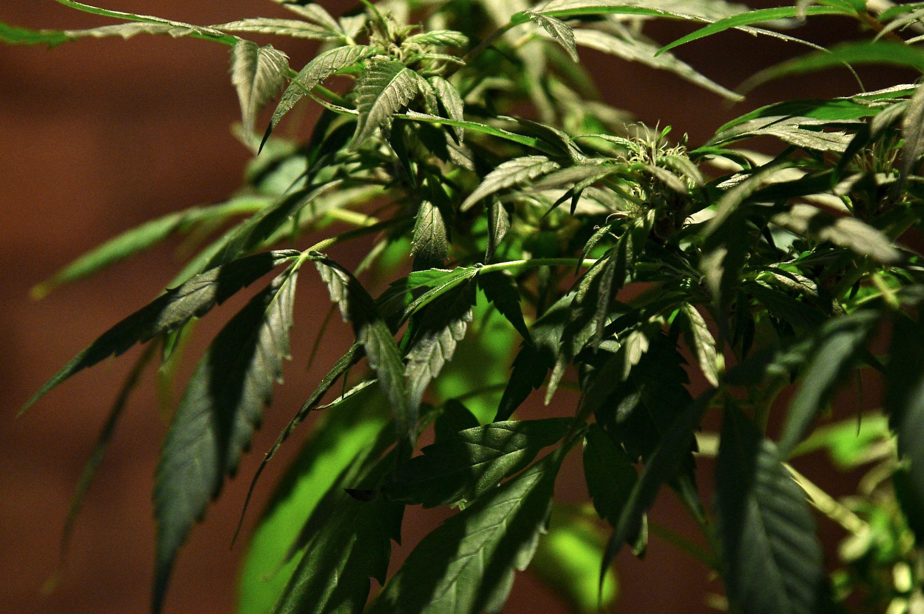 Pot/marijuana