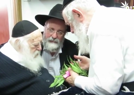 Rabbis Chaim Kanievsky and Yitzchok Zilberstein smell cannabis leaves.
