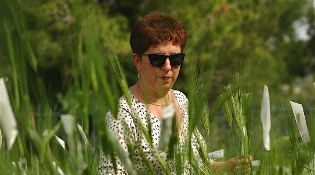 Searching For Good Genes: Tamar Krugman, the curator of the Wild Cereal Gene Bank in Haifa, is using the genes of wild wheat to breed a variety that is resistant to drought.