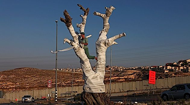 At The Checkpoint: Ariane Littman's performance, 'The Olive Tree,' took place in Jerusalem in 2011.