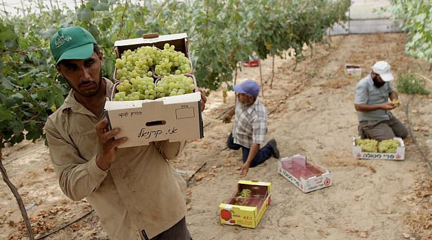 Grapes of Gaza: The Hamas government in Gaza has cut imports of Israeli fruit. The goal is to boost Palestinian producers.