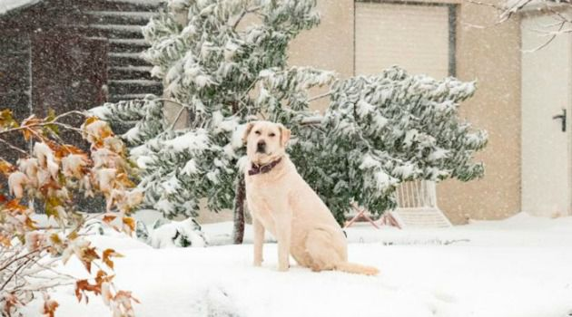 At Least Someone's Happy: Pooch enjoys the snow in the Golan Heights as a major winter snow slammed Israel.