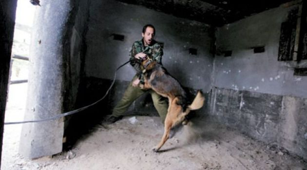 Dog and Pony Show: A training exercise for canine and human members of the Oketz unit.