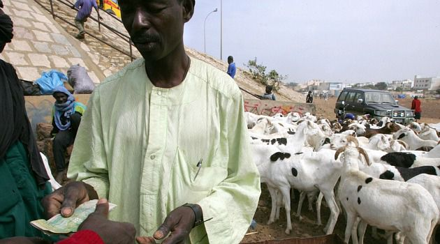 Goat Opening: A Senegalese trader sells a goat for the Muslim holiday of Tabaski. Israel?s aid program to its unlikely ally in West Africa includes an annual giveaway of beasts to impoverished communities.