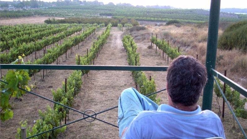 The writer surveying his vineyard.