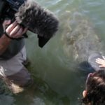 dan and manatee 300x225 150x150 Discovery Channel   GTT   and Manatees