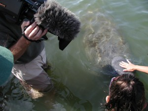 dan and manatee 300x225 Discovery Channel   GTT   and Manatees