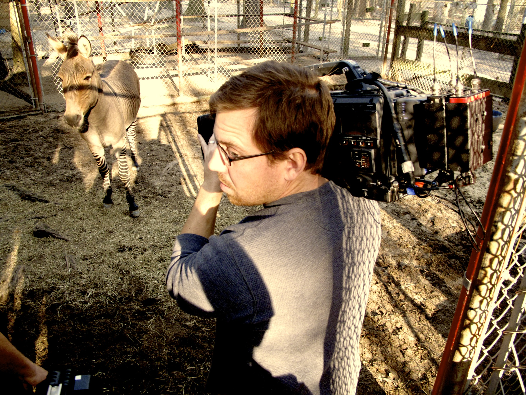 Zonkey Over Shoulder Raleigh Video Crew and ABCs Nightline, Enter the Eye of the Liger