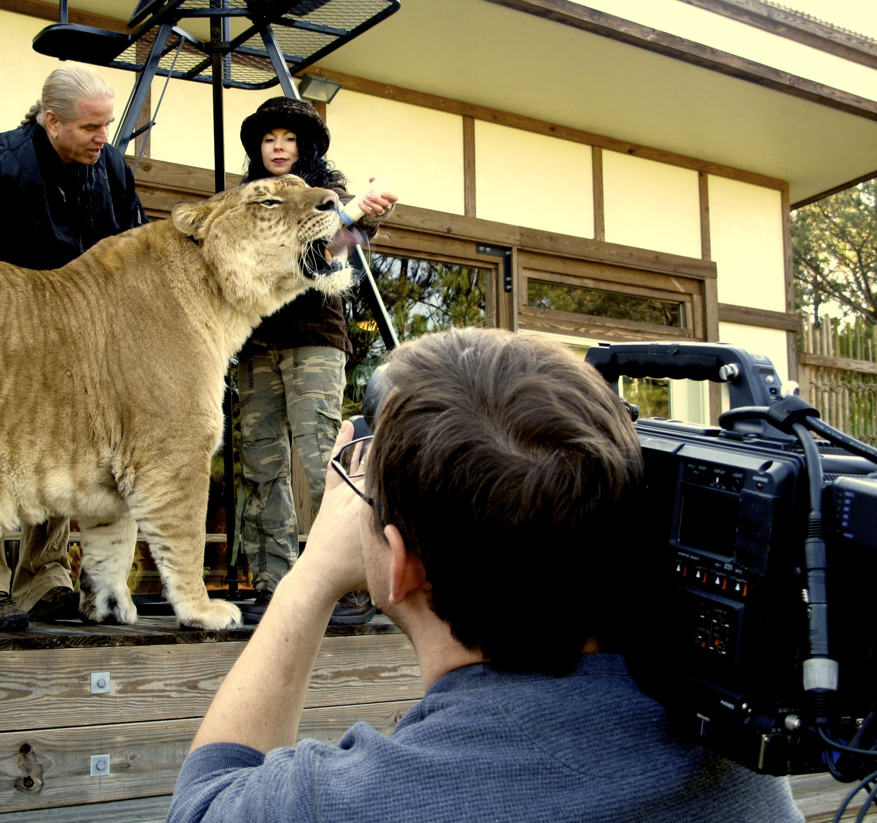 Feeding Liger Raleigh Video Crew and ABCs Nightline, Enter the Eye of the Liger