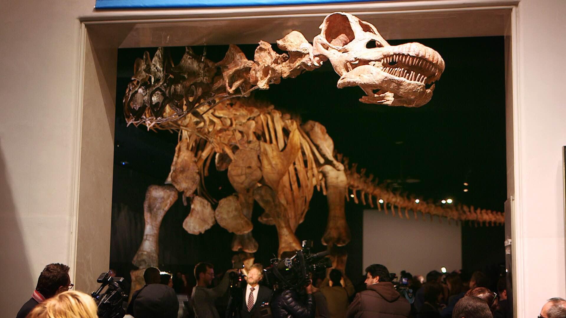 IMG 5088 New York City Crew Roars with Titanosaurus Rex at Museum