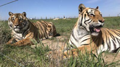 IMG 9261 400x225 Go To Team Denver Crew   Nightline ABC at The Wild Animal Sanctuary