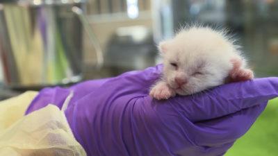 image16 400x225 Go To Team New York Crew | Animal Planet | Adoption Series