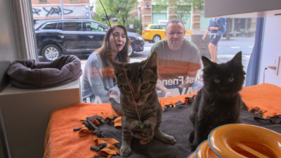 image36 400x225 Go To Team New York Crew | Animal Planet | Adoption Series