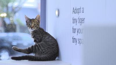 image46 400x225 Go To Team New York Crew | Animal Planet | Adoption Series