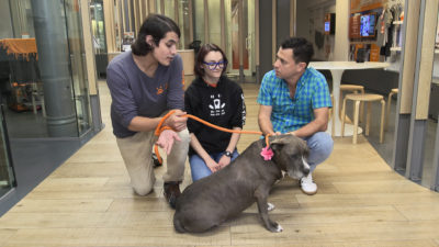 image53 400x225 Go To Team New York Crew | Animal Planet | Adoption Series